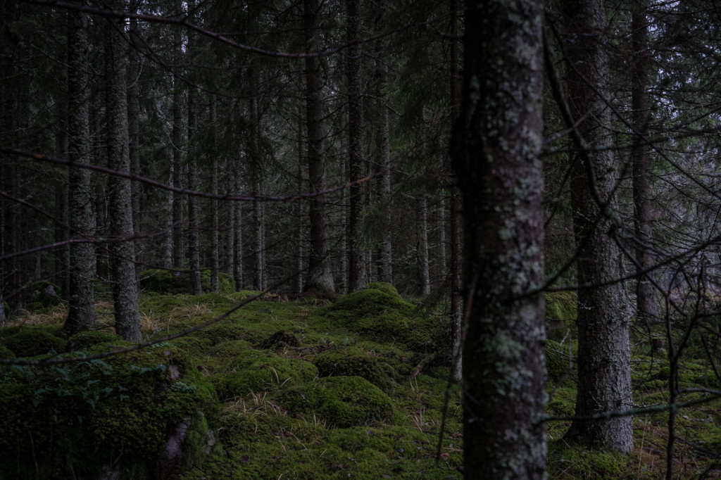 Into the woods of Eskilstuna